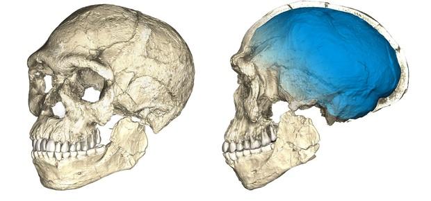 Fósseis mais antigos da espécie humana (Foto: Philipp Gunz, MPI EVA Leipzig/Handout via REUTERS)