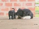 Furtos crescem e até cães viram alvo de criminosos em São Carlos e região