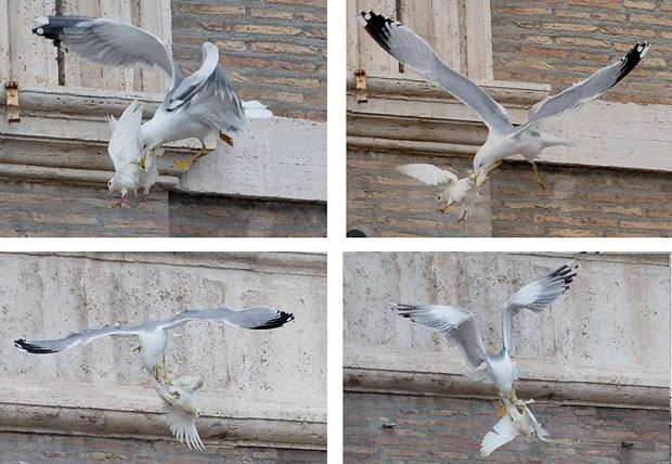 Sequência de fotos mostra gaivota perseguindo e atacando pomba que foi solta pelo Papa Francisco e por duas crianças neste domingo (26) no Vaticano (Foto: Gregorio Borgia/AP)