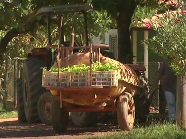 Agricultores de SP são investigados na 'Máfia da Merenda' (Foto: Reprodução / EPTV)