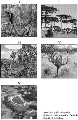 Formções vegetais no Brasil (Foto: Reprodução/Fuvest)