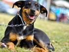 Desfile de cães no AP quer chamar a atenção para a adoção e cuidados