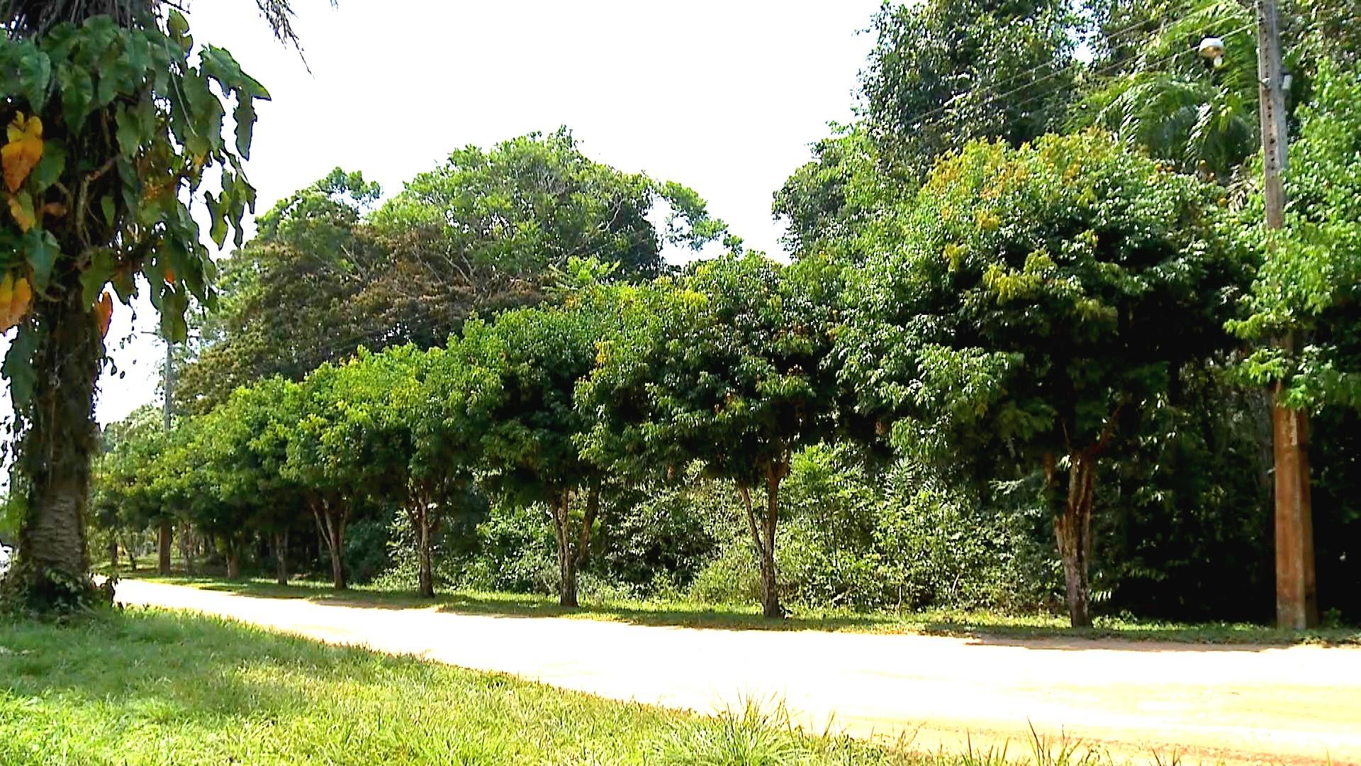 Plantas amazônicas é destaque no Amazônia Rural (Foto: Amazônia Rural)