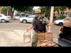 Homem é preso pela 3ª vez com aves silvestres em cativeiro em Uberlândia