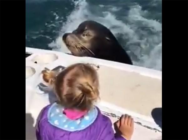 """Leão marinho pega """"carona"""" em barco durante passeio em família (Foto: Reprodução / YouTube)"""