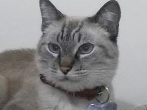 Amigo pet gato
