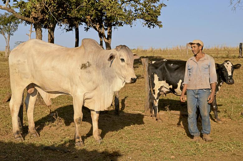 zebu-edicao-370-agosto-2016 (Foto: Maurício Farias e Douglas Luzz)