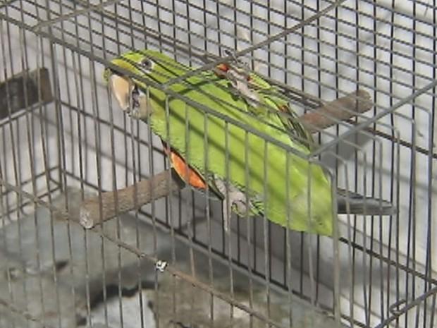 Policial viu anúncio de troca da ave em rede social (Foto: Reprodução / TV TEM)