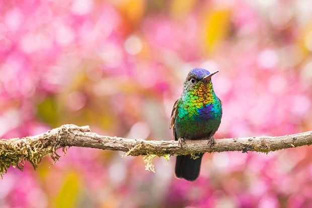 20 beija-flores (Foto: Alvaro Cubero Vega / reproduçã)