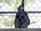 Batalha na Justiça vai decidir o futuro do Zoo do Rio de Janeiro