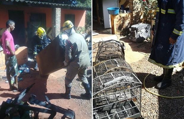 Pássaros que estavam em gaiolas morreram com o calor e fumaça do incêndio, em Valparaíso de Goiás (Foto: Divulgação/Corpo de Bombeiros)