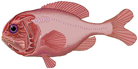 (Foto: Wikimedia)