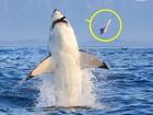 Lista reúne 'tubarão banguela' e mais flagras de botes fatais