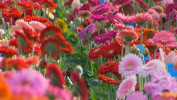 Flores são um dos destaques do programa deste sábado (Foto: Reprodução EPTV)