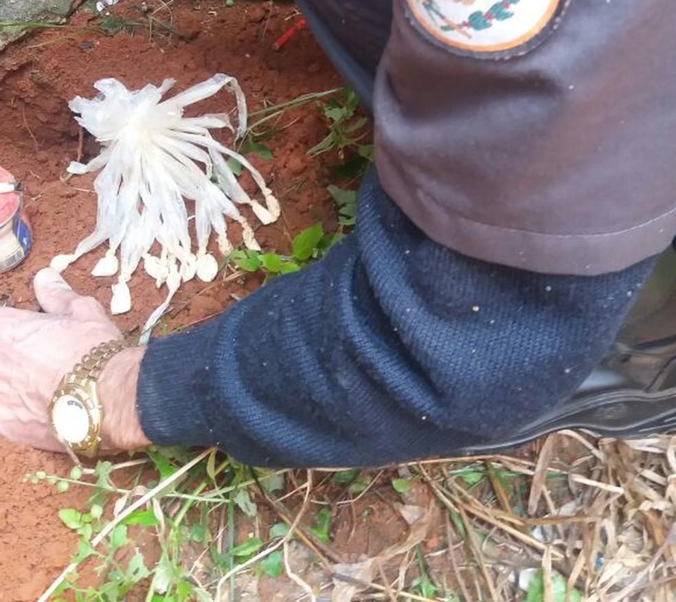 Droga apreendida em terreno abandonado em Italva (Foto: Polícia Militar/Divulgação)