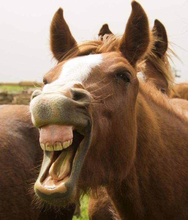 Cavalo parece sorrir para a câmera nas Colinas de Golã, a Síria (Foto: Jack Guez/AFP)