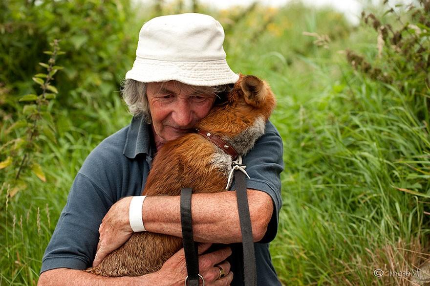 Momentos de carinho não são incomuns entre Gibbon e as raposas (Foto: Reprodução)