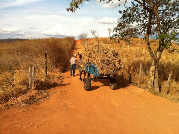 Com a carroça cheia de capim, José Maria Neto volta com o capim para seus animais (Foto: Adriana Lisboa / G1)