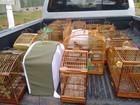 Operação apreende 32 aves silvestres em Camaragibe, no Grande Recife