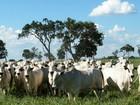Integração ajuda a viabilizar a agricultura na região leste de MS