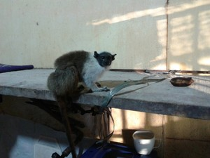 Animal foi encontrado amarrado ao pé de uma mesa no interior do estabelecimento (Foto: Divulgação/Polícia Civil)