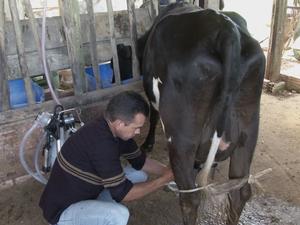 Técnicos do Sebrae vêm e nos orientam, relata produtor rural (Foto: Reprodução/TV TEM)