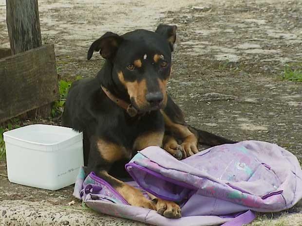 Cão abandonado 'guardou' a mochila com o diário, em Campinas  (Foto: Reprodução EPTV)