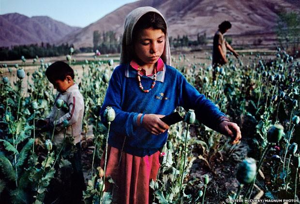 A mostra reúne imagens de arquivo dos registros feitos por McCurry da cultura e do povo afegão. Nesta foto, de 1992, uma menina trabalha num cultivo de ópio (Foto: Steve McCurry/Magnum Photos)
