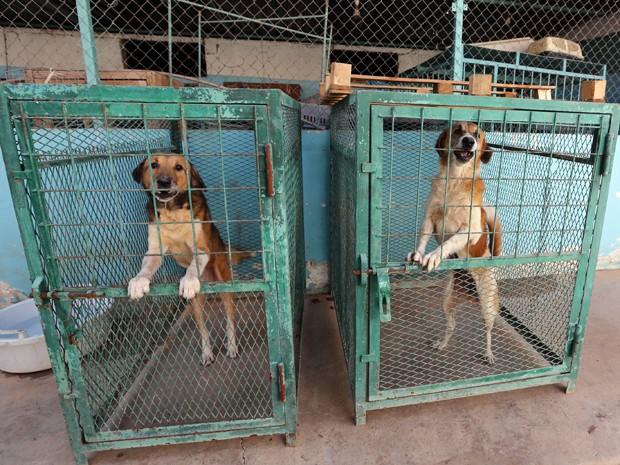 Cães resgatados pelo veterinário líbio Khalal Kaal em sua clínica em Tripoli  (Foto: AFP Photo/Mahmud Turkia)