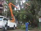 Temporal em Curitiba deixa estragos e nove mil casas sem energia elétrica