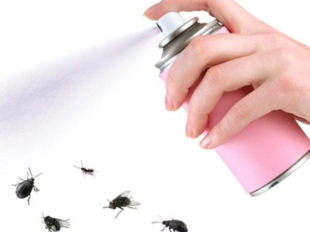 Imóveis mosca_inseticida (Foto: Shutterstock)