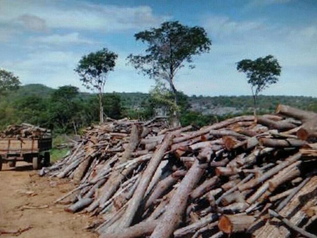Extreção era feita na Reserva Indígena Xacriabá e do Parque Nacional Cavernas do Peruaçu, diz PF (Foto: Polícia Federal/Divulgação)