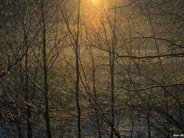 """Ben Wayman venceu na categoria """"Light of the Land"""" por essa imagem de árvores na margem de um rio em Allen Banks, perto de Haydon Bridge, em Northumberland. (Foto: Ben Wayman)"""