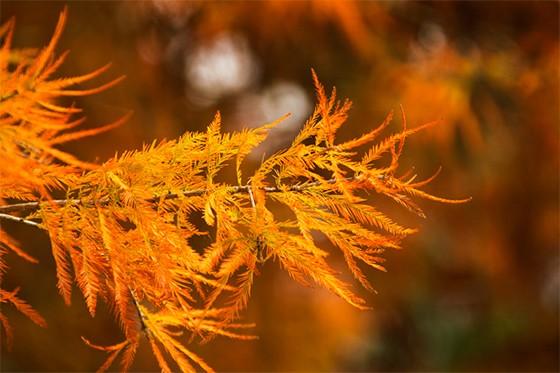 O sol ilumina os galhos das árvores  (Foto: © Maya Brasiliano )
