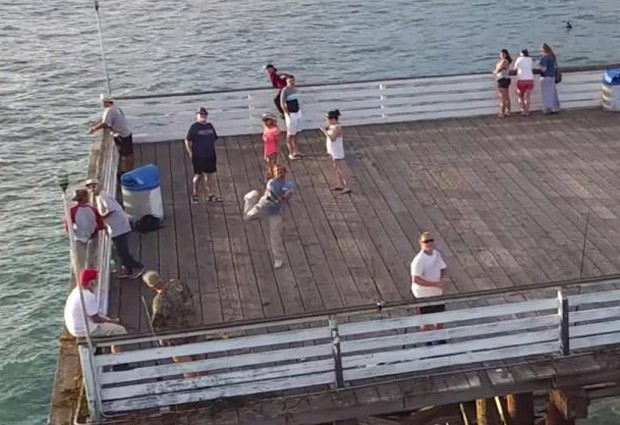 Pescador fisgou drone que sobrevoava píer em San Diego (Foto: Reprodução/YouTube/Tice Ledbetter)