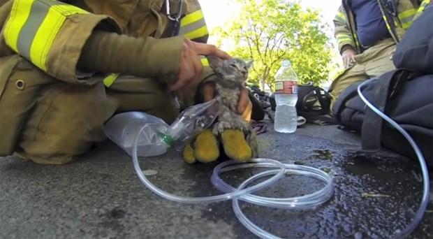 Bombeiro reanimou o animal usando uma máscara de oxigênio (Foto: Reprodução)
