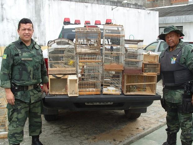 31 aves foram apreendidas e três homens foram presos (Foto: Polícia Militar / Divulgação)