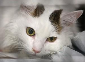Gato (Foto:  John Moore/Getty Images)