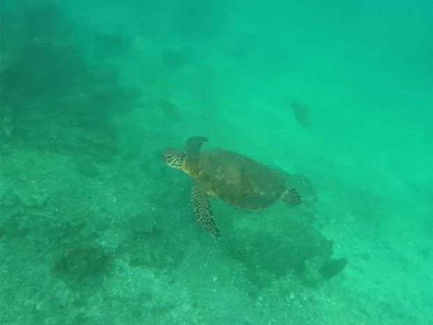 Tartaruga foi flagrada por câmera de aeromodelo após mergulho acidental (Foto: Reprodução/YouTube/MrLiftHog)