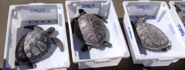 Tartarugas são devolvidas ao mar no RS (Foto: Nathalia King/RBS TV)