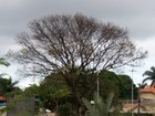 Meteorologia prevê chuva no centro e sul de MS nesta segunda-feira