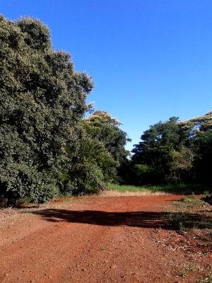 Antigo acesso à Estrada do Colono, em Serranópolis do Iguaçu, está tomado pela vegetação (Foto: Fabiula Wurmeister / G1)