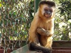 'Se macaca não se adaptasse pediria para ela voltar', diz diretora de ONG