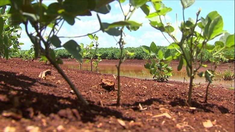 soja_paraná (Foto: Reprodução/TV Globo)