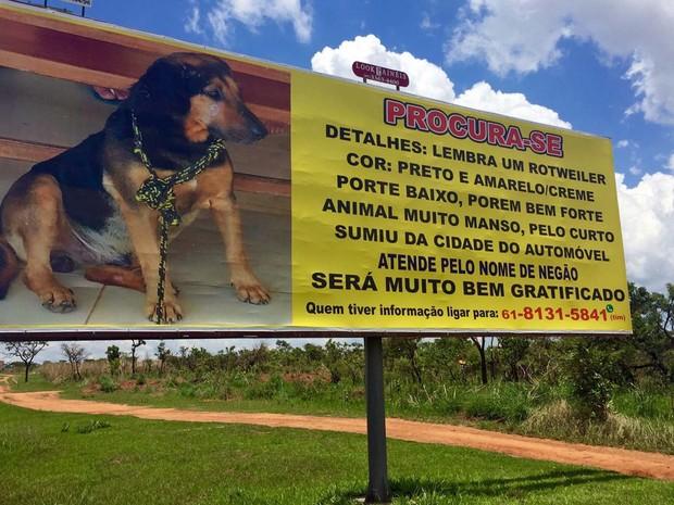 Outdoor de 9m × 3m na Estrutural, em Brasília, mostra foto de cachorro e apelo para encontrá-lo (Foto: Jéssica Nascimento/G1)
