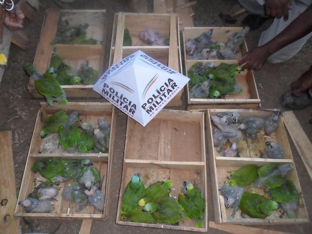 As aves silvestres estavam dentro de carro em caixas de madeira (Foto: Divulgação/Polícia Militar)