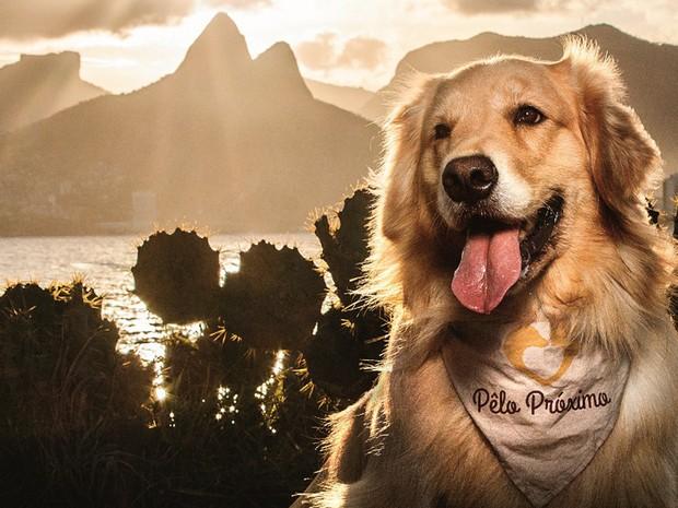 Projeto filantrópico faz calendário com fotos de cachorros em pontos do Rio (Foto: Projeto Pêlo Próximo/ Divulgação)