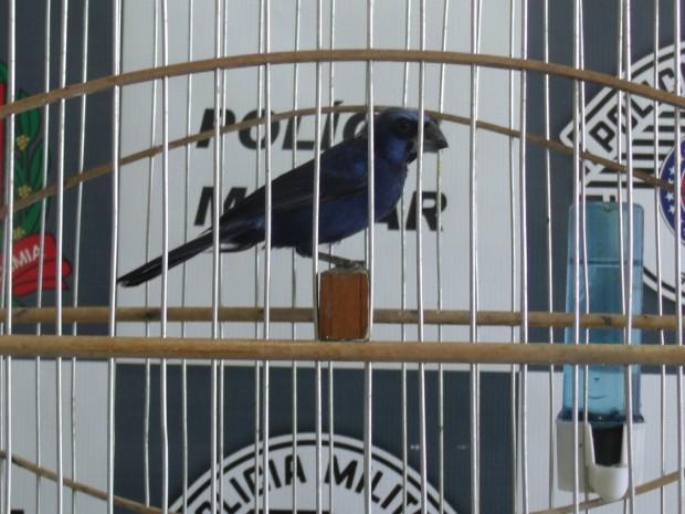 Pássaros foram localizados pela Polícia Ambiental em Santos, SP (Fot Roberto Strauss / Arquivo Pessoal)