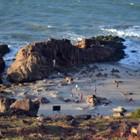 Turistas buscam tranquilidade em Jericoacoara (Dieggo Melo)