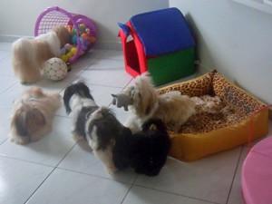 Cachorros têm quarto só pra eles (Foto: Arquivo Pessoal/Celene Almeida)